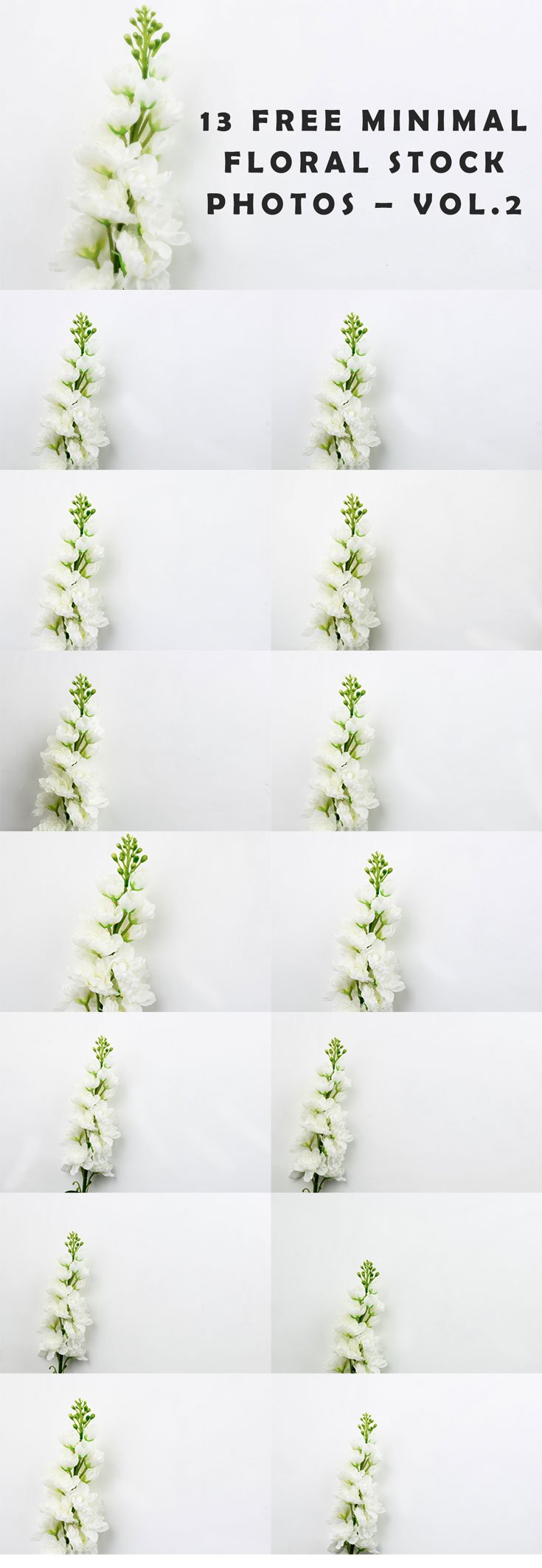 13 Free Minimal Floral Stock Photos – Vol.2