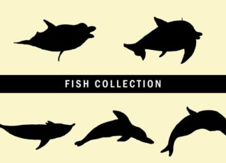 5 Free Fish Collection Clipart