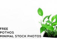 Free Pothos Minimal Stock Photos
