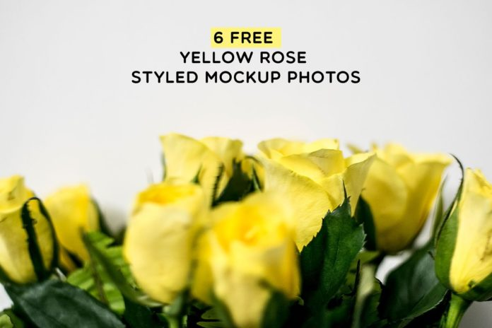 6 Free Yellow Rose Styled Mockup Photos
