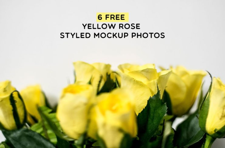 6 Free Yellow Rose Styled Mockup Photos
