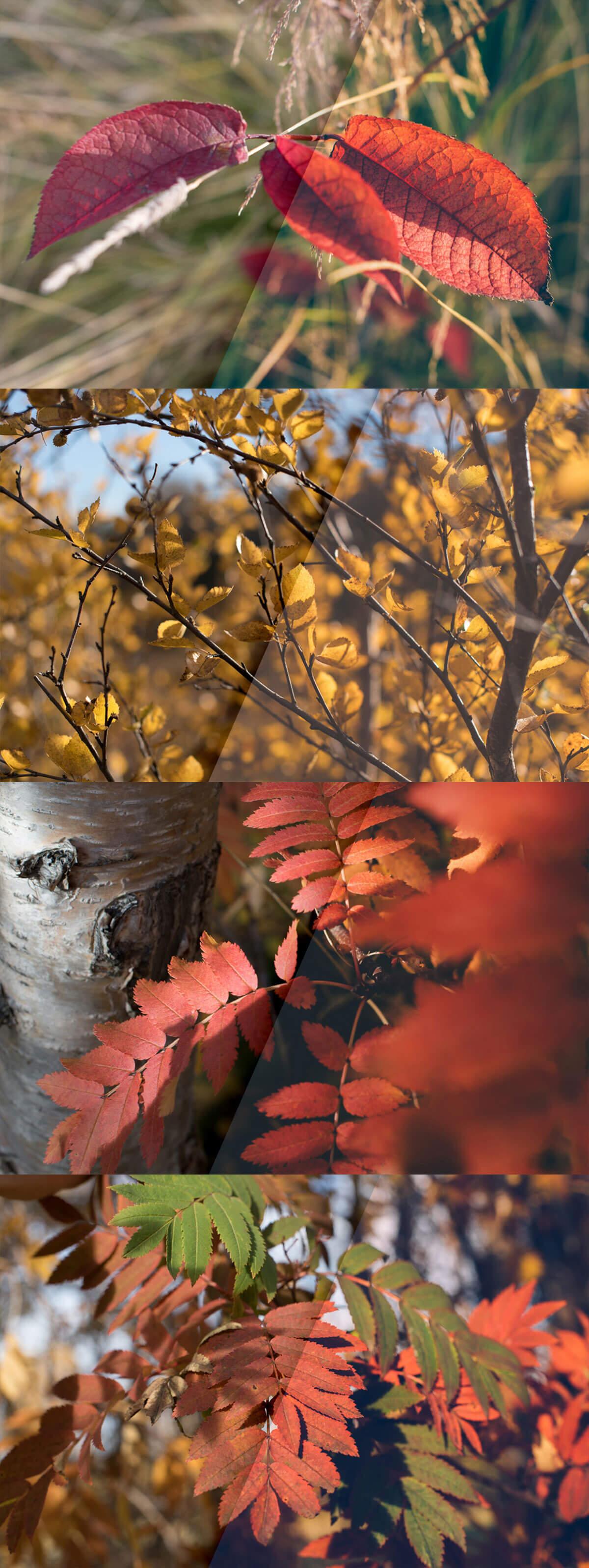 Free Vintage Autumn Colors Lightroom Presets