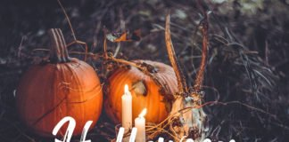 Free Halloween Lightroom Presets