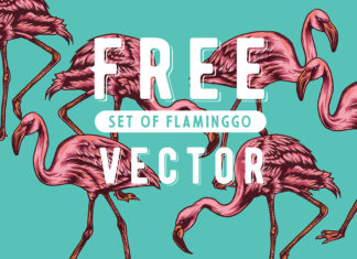 Free Flaminggo Vector Set