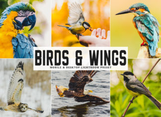 Free Birds & Wings Lightroom Preset