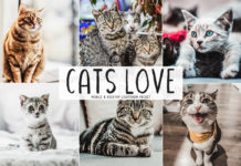 Free Cats Love Mobile & Desktop Lightroom Preset