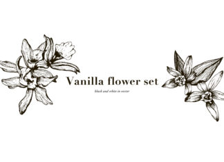 Free Vanilla Flowers Set