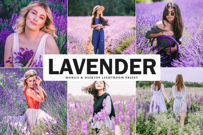 Free Lavender Lightroom Preset