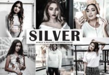 Free Silver Lightroom Preset
