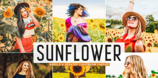 Free Sunflower Lightroom Preset