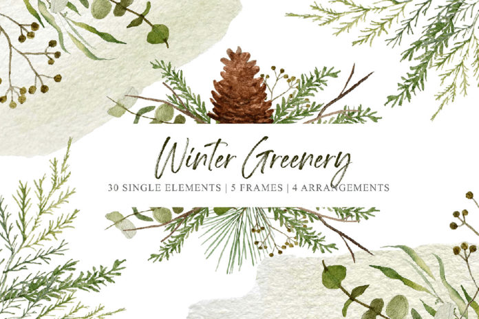 Free Winter Greenery Clipart Set